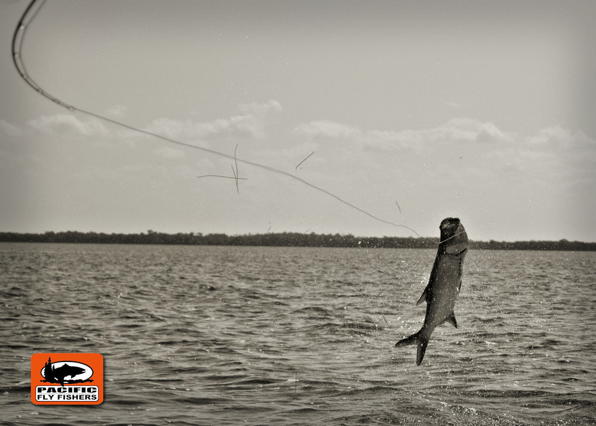 Tarpon Fly Fishing