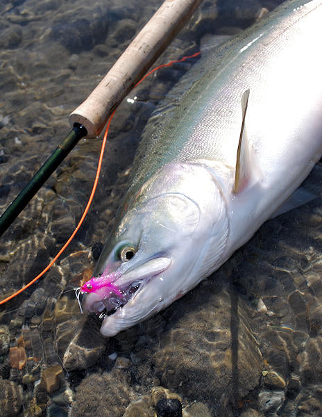 Skagit River Pink Salmon Fly Fishing