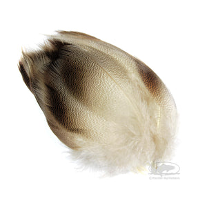 Bronze Mallard Feathers - 24 Select - Fly Tying Materials