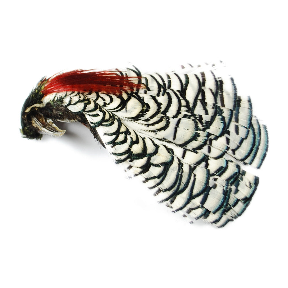 Details about  /One Amherst Pheasant Head Neck Cape Classic Salmon Hackle Fly Tying Feathers
