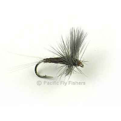 Mahogany Thorax - Pacific Fly Fishers