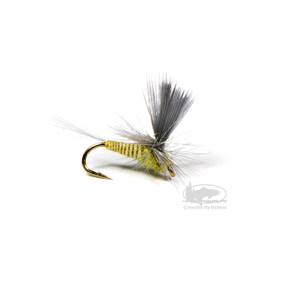 Parachute Quill Body Blue Wing Olive - Dry Fly