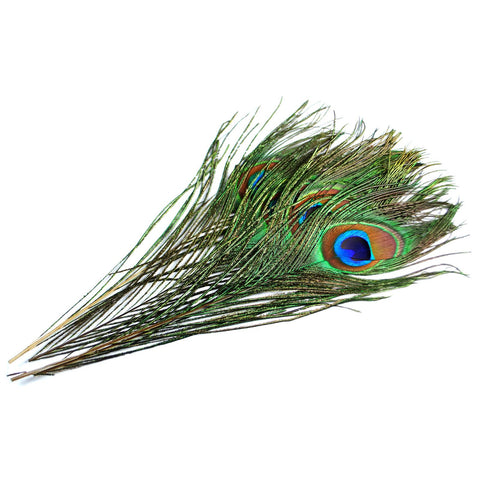 Peacock Eyed Tail Feathers