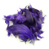 Teal Flank Feathers - Purple