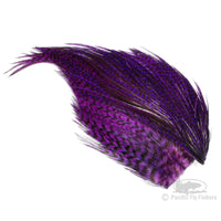 Whiting Bugger Packs - Purple Grizzly