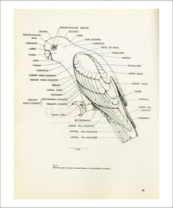 Descriptive parts of a parrot no. 22, Art Print - Vintage Art, canvas prints