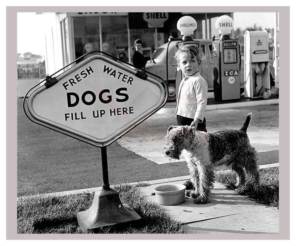 Dogs Fill Up Here - Vintage Art, canvas prints