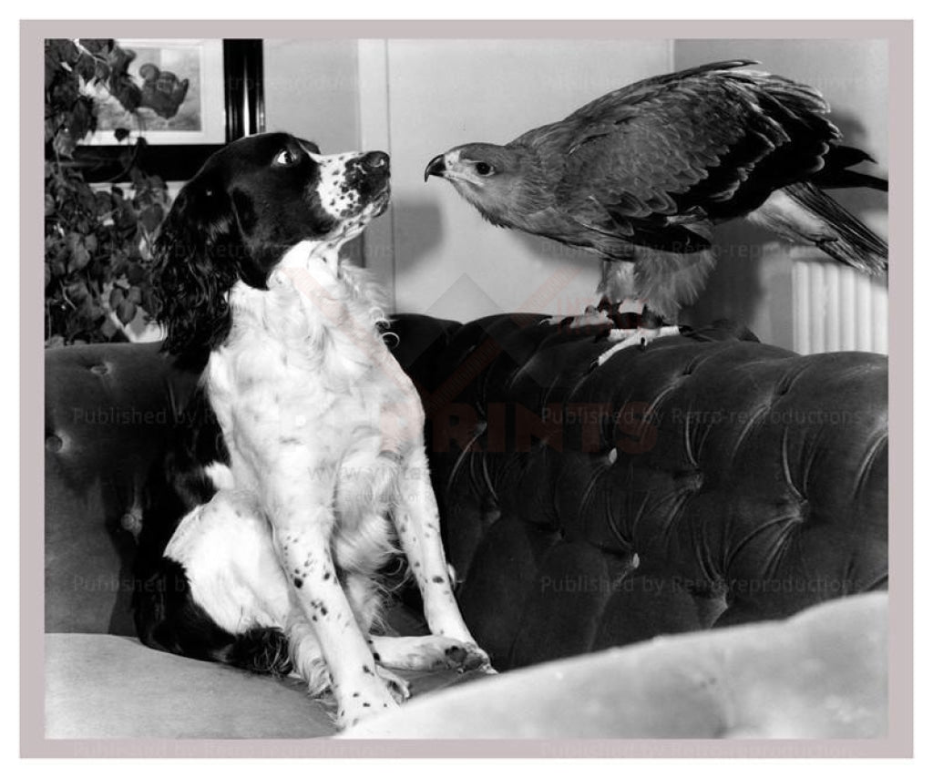 Jagger the Tawny Eagle and his Friend the Spaniel - Vintage Art, canvas prints