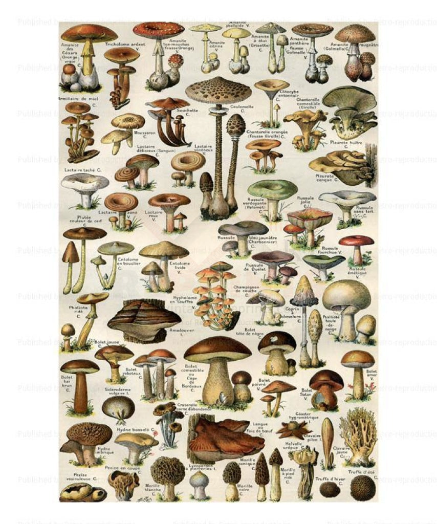 Mushrooms 1855, Art Print - Vintage Art, canvas prints