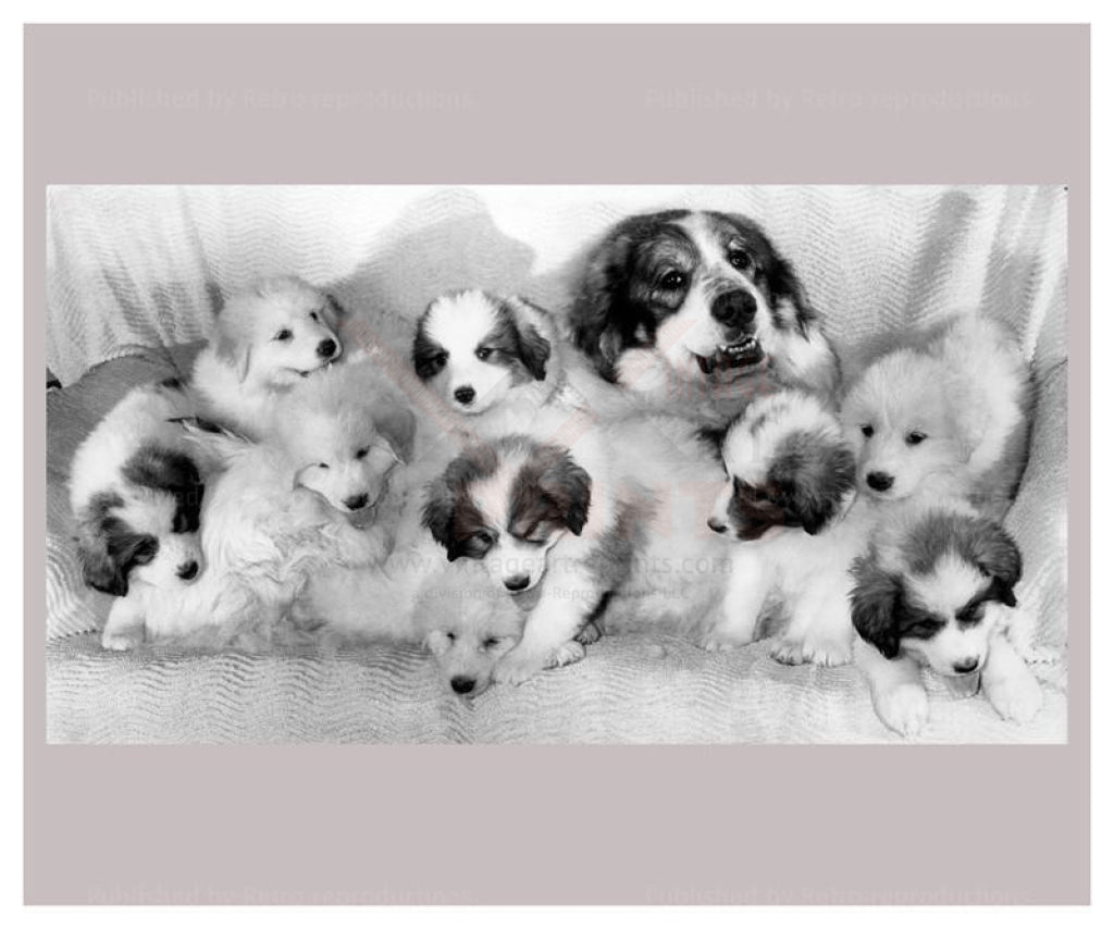 Proud mum shows of her Pyrenean Mountain Pups - black and white photography - Vintage Art, canvas prints