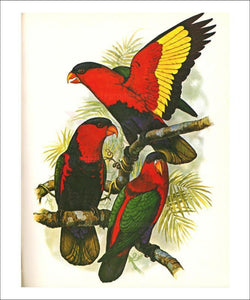 Purple Bellied Lory no. 65 - Vintage Art, canvas prints