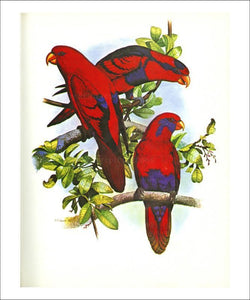Red and Blue Lory no. 53 - Vintage Art, canvas prints