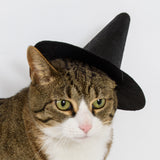 cat wearing small black witch hat