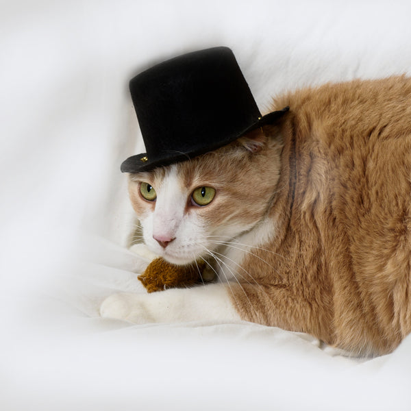 cat wearing black top hat