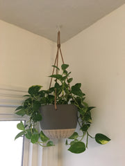 Hanging House Plants