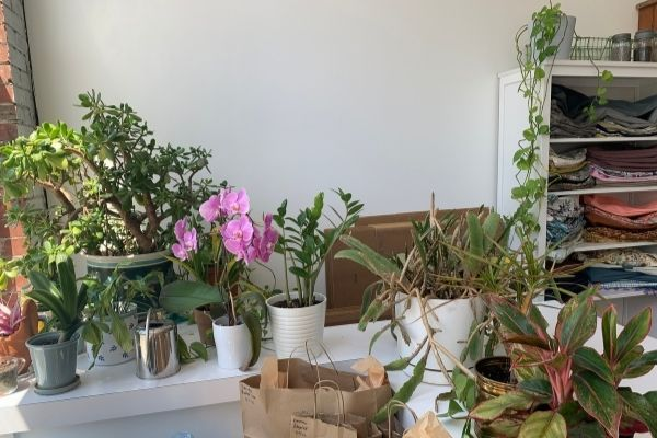 Plants and Yoga Props