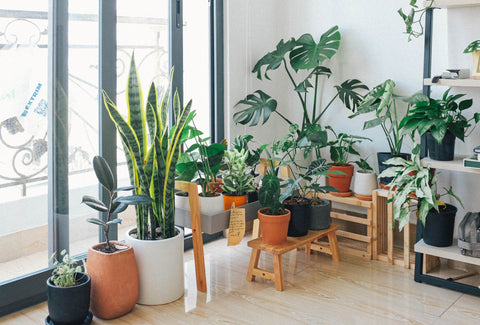 Indoor Plants Boho Living