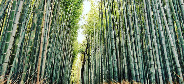 Sustainable Bamboo for yoga wear