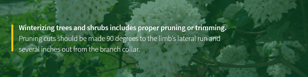 winterizing trees and shrubs always includes proper pruning and trimming