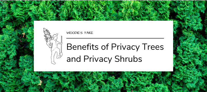Benefits of Privacy Trees and Privacy Shrubs
