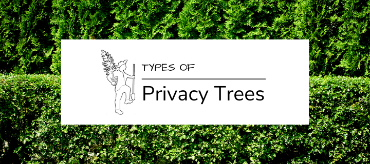 Types of Privacy Trees for Sale Online