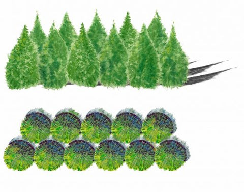 Arborvitae Green Giant Privacy Screen Drawing