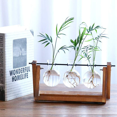 Hydroponic Vase with Plants