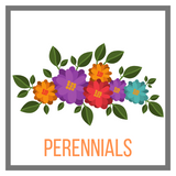 Shop Perennials Online Garden Goods Direct