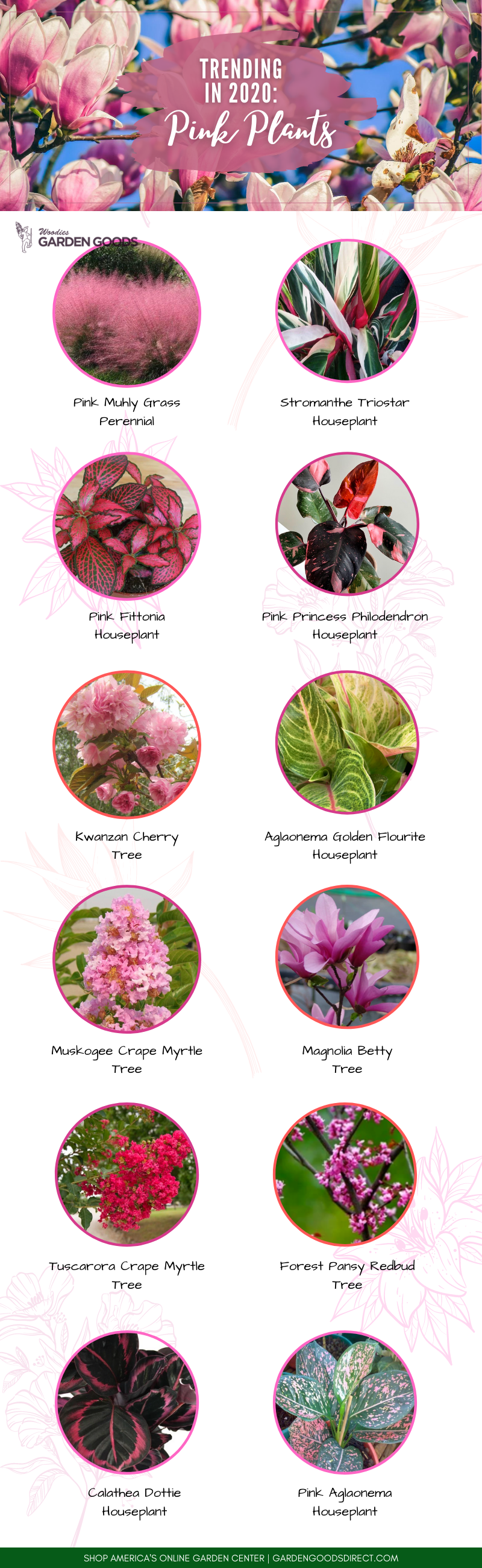Pink plants for sale online