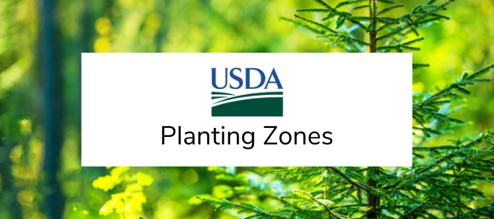 USDA Hardiness Planting Zones for Privacy Screens and Shrubs