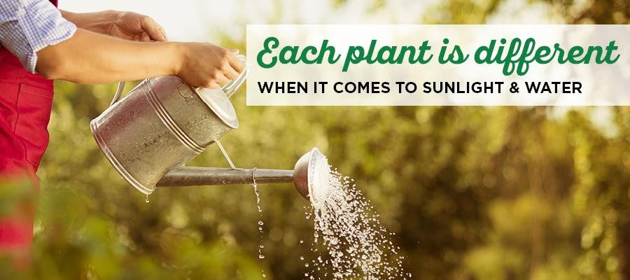 Each Plant Is Different When It Comes to Sunlight & Water