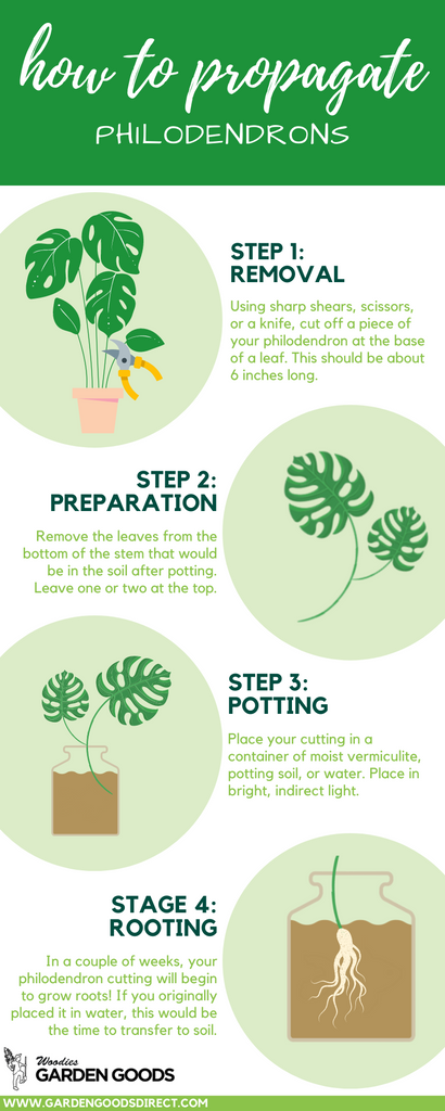 how to propagate philodendron plants