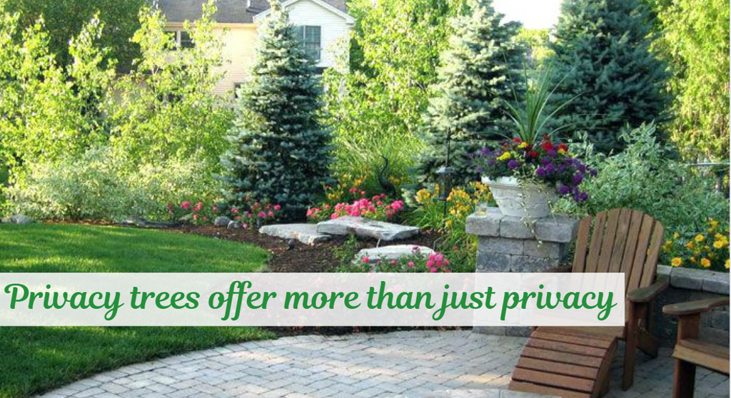 Privacy Trees Offer More Than Just Privacy