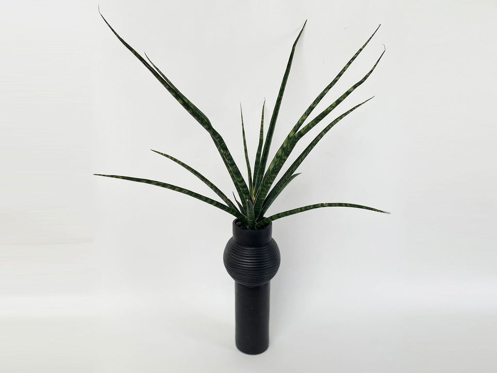 Planter With Sansevieria Bacularis