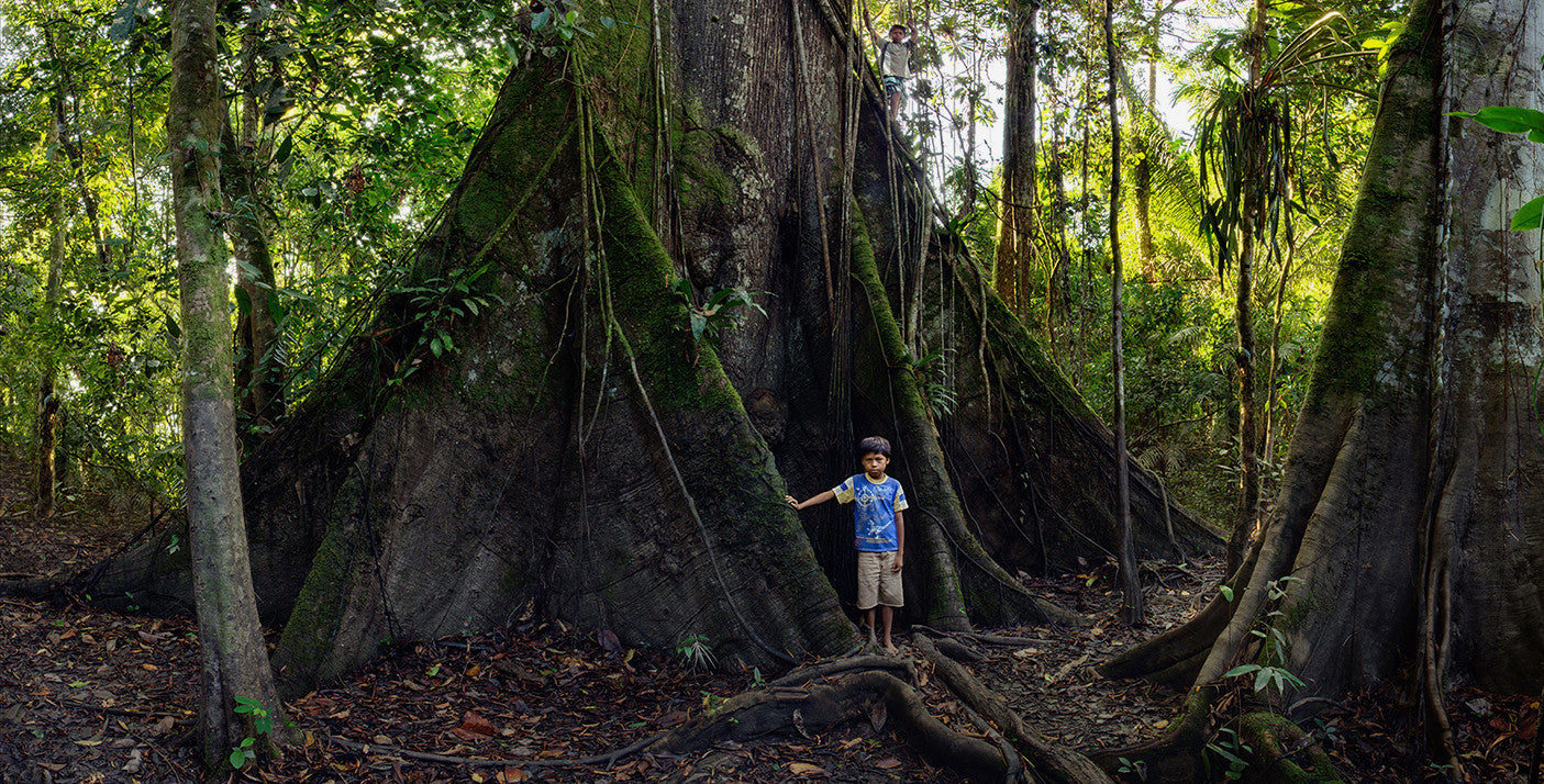 Ancient Ceiba and Boys