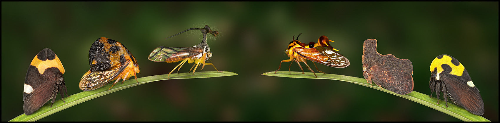 Treehopper Profile Lineup