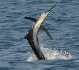 Pez Vela Sportfishing -Costa Rica- - Reel Draggin' Tackle - 5