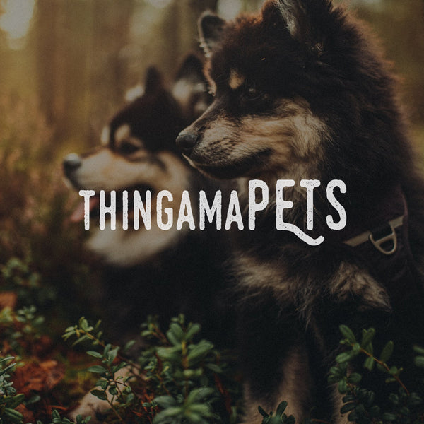 ThingamaPETS