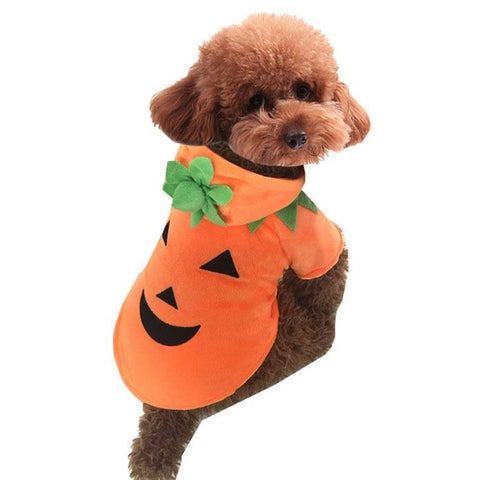 cozy pumpkin hoodie for dogs