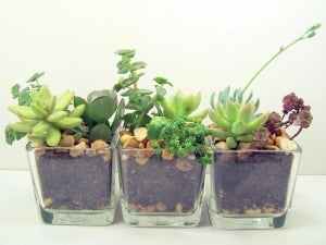 GRACESHIP Online Retailer Loves Plants To Bring Life To Your Desk