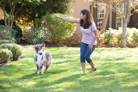 YardMax® In-Ground Fence™ Rechargeable Digital Receiver Collar Play Picture