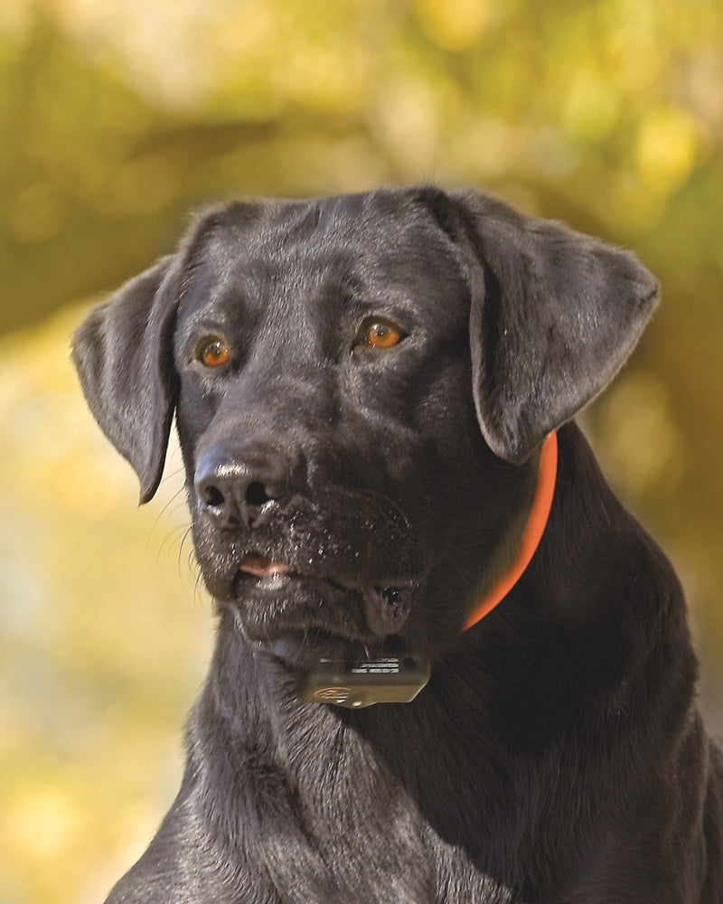 SBC-18 SportDOG Brand® NoBark 18 Photo