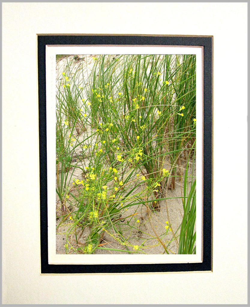 Beach Flowers, Cape Cod Matted Print