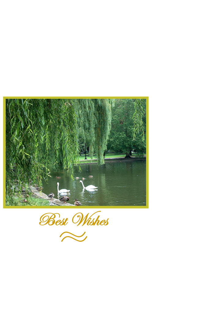 Best Wishes, Pair of Swans on Pond