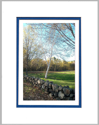 Birch in Spring Matted Print