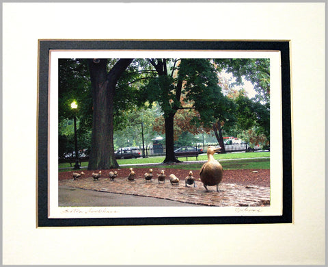 Boston Ducklings Matted Print