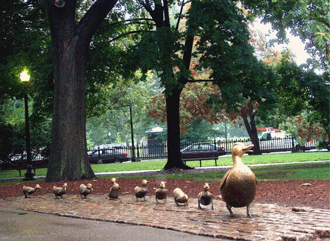 Boston Duckling
