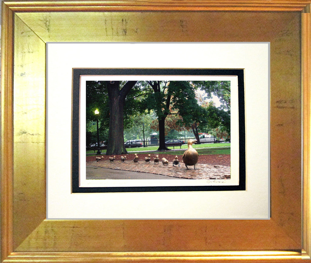 Boston Ducklings Framed Print