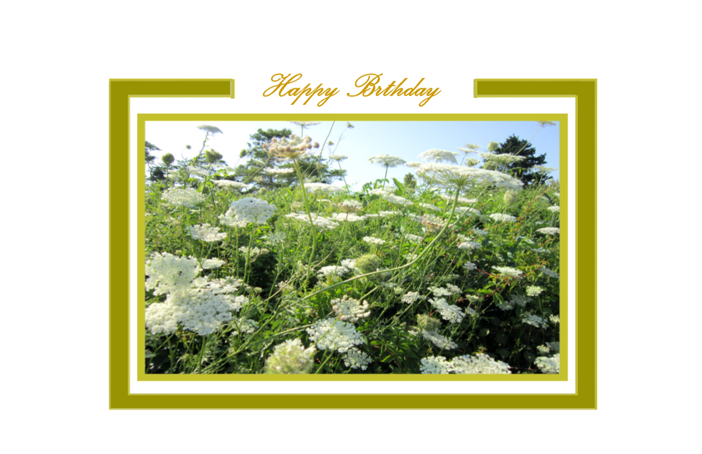 Happy Birthday, Queen's Lace in Meadow