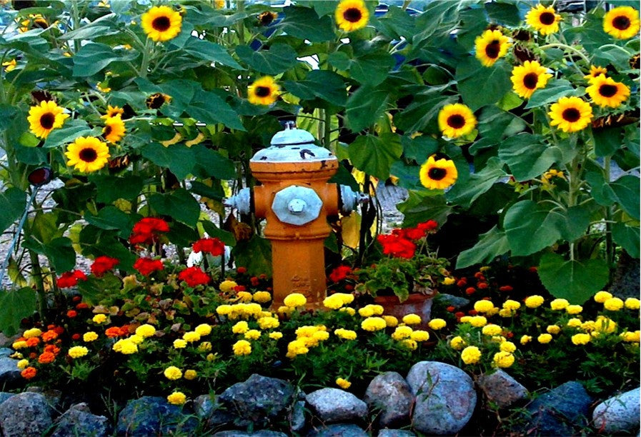 Hydrant with Sunflowers